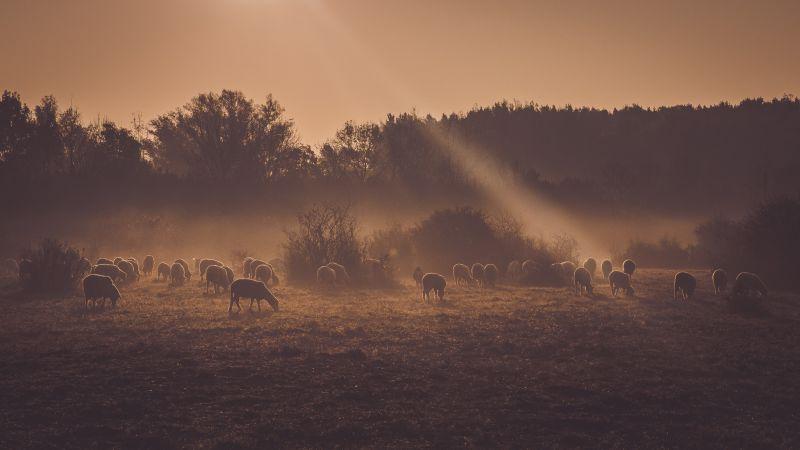 Tvoja podpora nám pomôže ochraňovať a obnovovať vzácnu prírodu v okolí Dunaja!